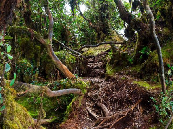 cameron-highland-photo4